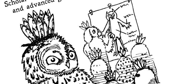 Realm of Owls -sarjan lähikuvassa pöllö katsoo tarkkaavaisena.